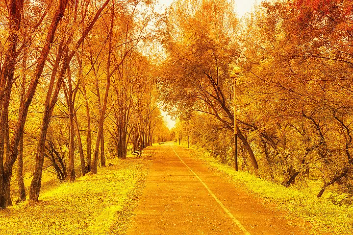 Beautiful fall, orange, gold