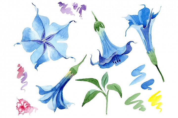 Brugmansia soft blue watercolor png