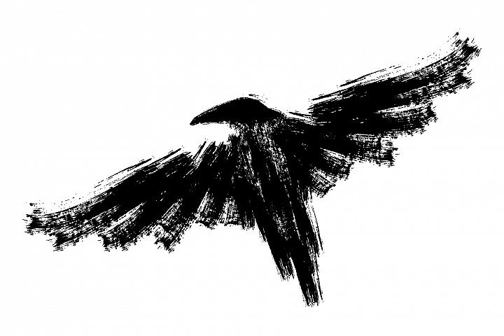 Black raven. Ink crow illustration.