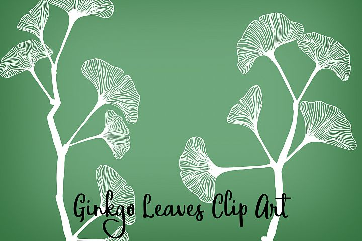 Ginkgo Leaves Clip Art, Vectors, PNGs and Digital Brushes