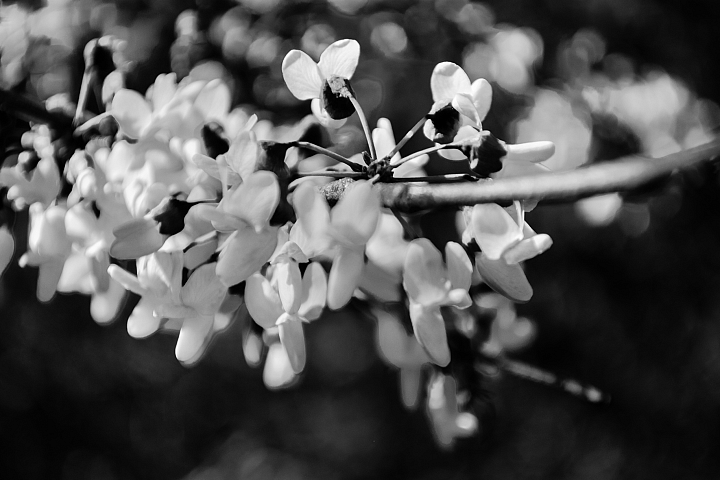 Spring Flowers Black and White