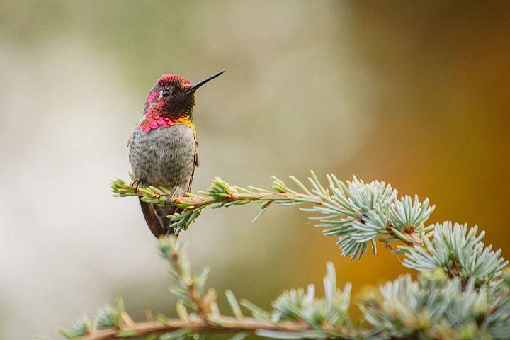 Hummingbird photo 4