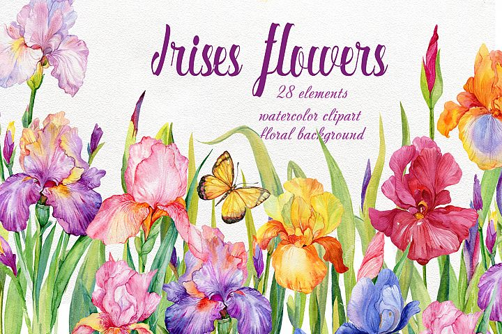 iris flowers. watercolor clipart