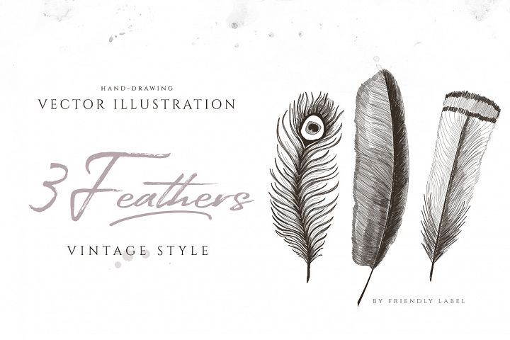 3 FEATHERS ILLUSTRATIONS