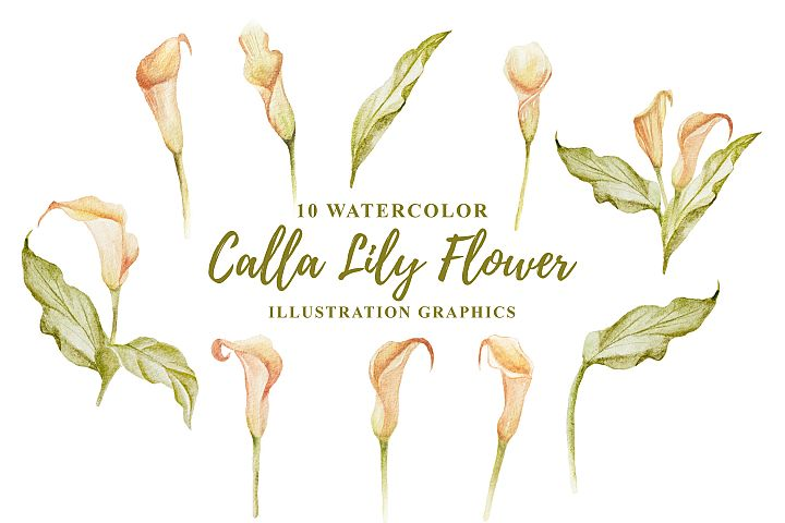 10 Watercolor Calla Lily Flower Illustration Graphics