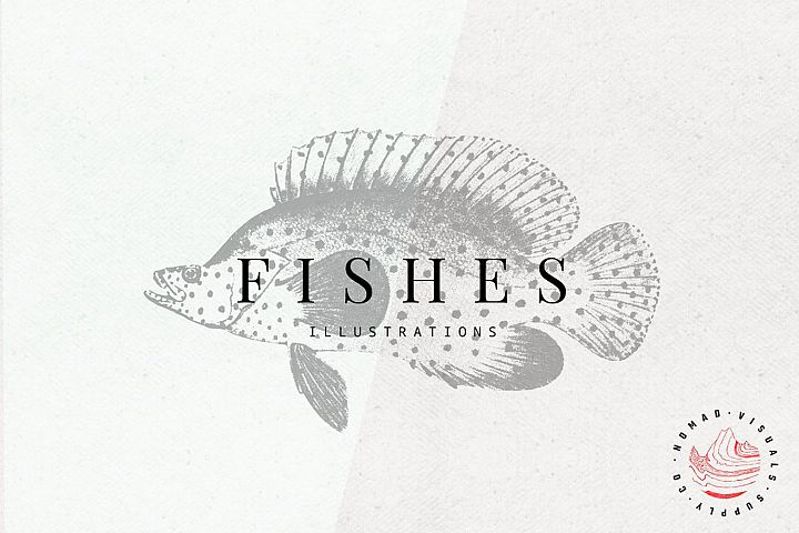 Premium Fishes Illustrations