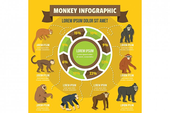 Monkey infographic concept, flat style