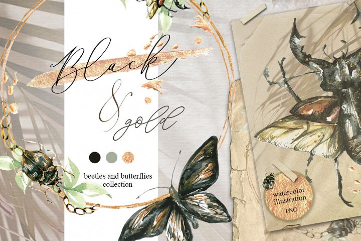 Black & gold, beetles and butterflies collection