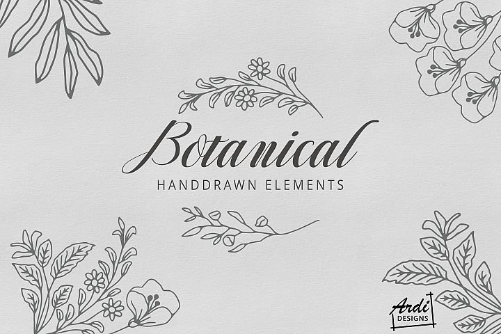 Handdrawn Botanical Illustration
