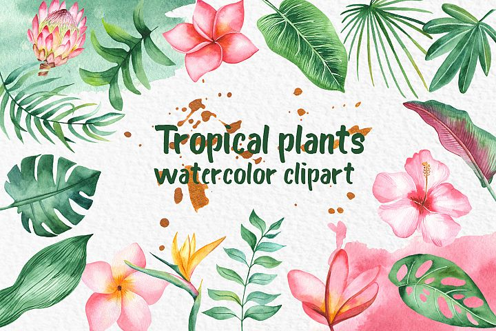 Tropical plants Watercolor clipart Leaves and flowers
