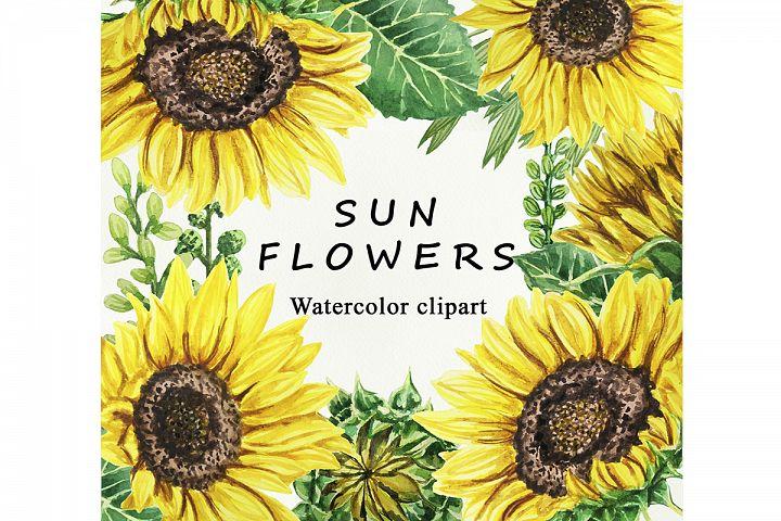 Sunflower Watercolor clipart. Separate elements