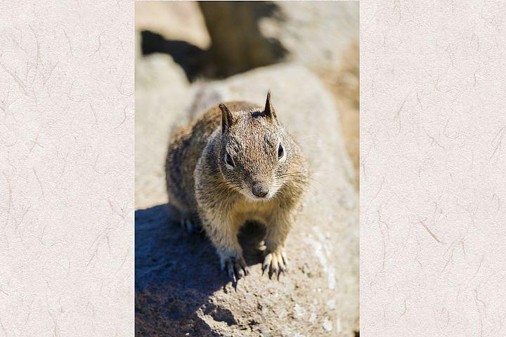 Squirrel photo 20