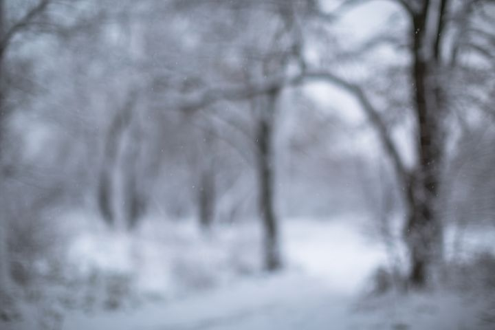 Blurred snow forest