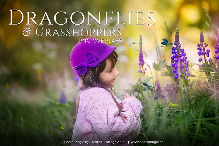 Fantasy Dragonflies & Grasshopper Photo Overlays