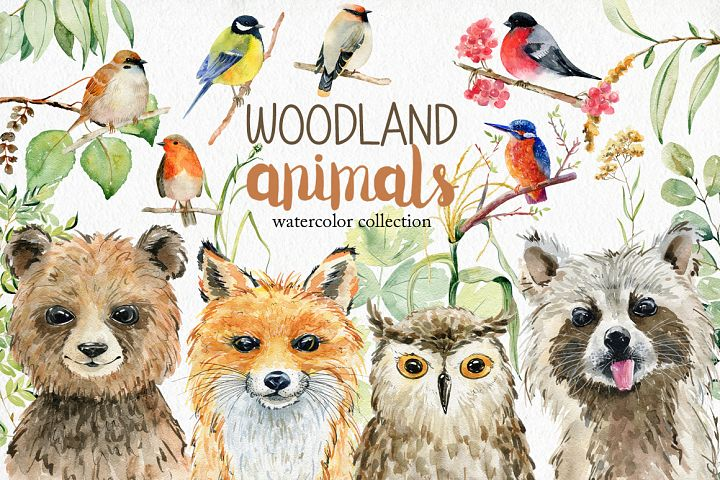 Woodland Animals. Watercolor set.