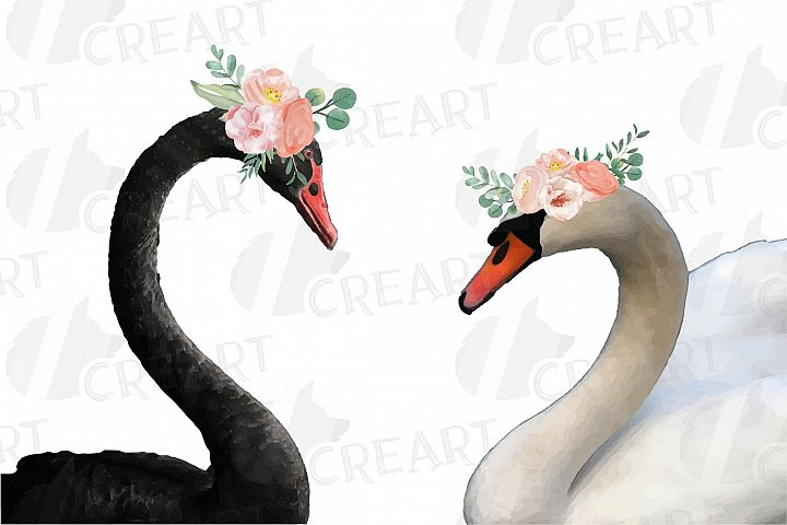 Black swan and white swan with blush floral crown clip art