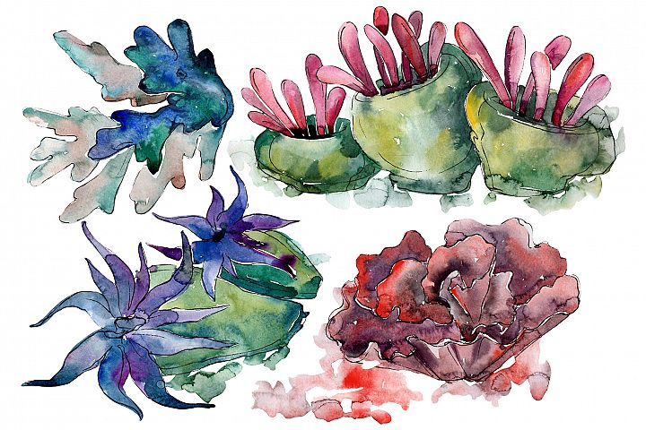 Corals for happiness watercolor png