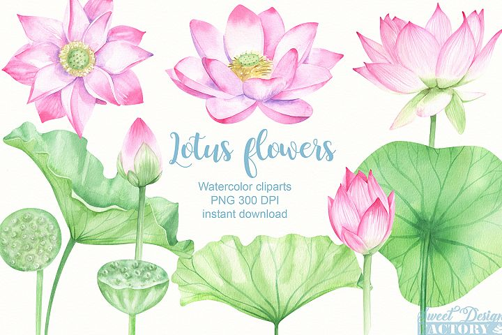 Lotus flower cliparts