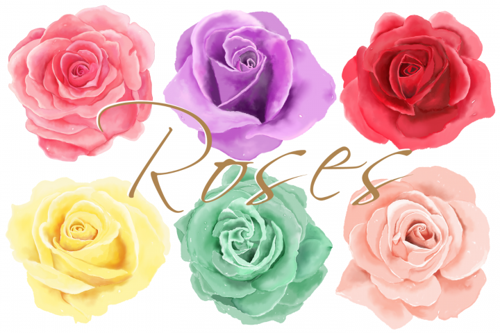 6 Digital Watercolor Roses | Clip Art Illustrations PNG/JPEG