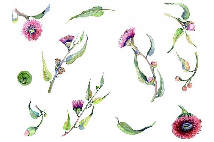 Eucalyptus watercolor plant png