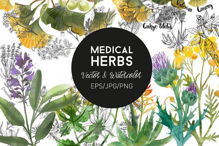 Medical Herbs. Vector & watercolor
