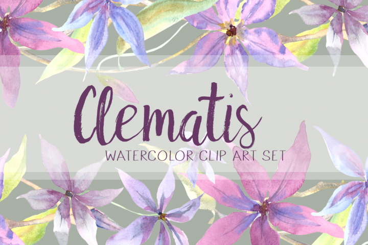 Watercolor Clematis Clip Art Set - Pattern, Border, Wreath