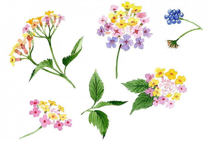 Pink lantana watercolor png
