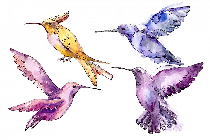 Tropical colibri birds PNG watercolor set
