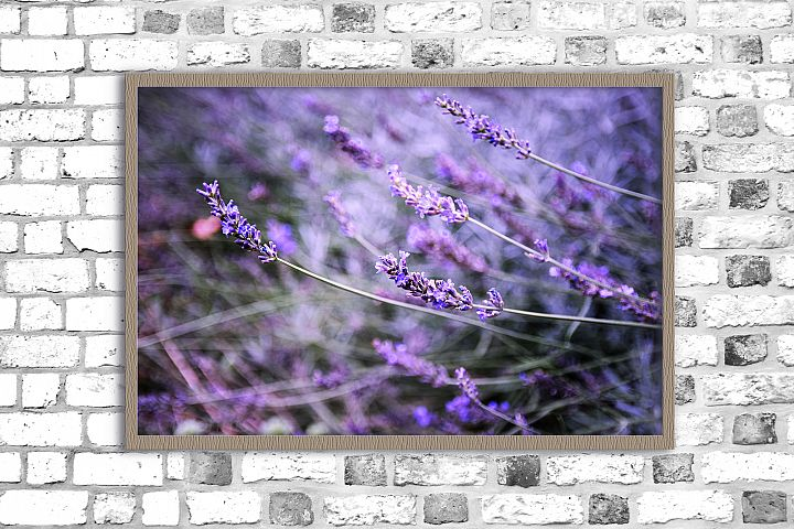 Nature photo, lavender print, spring flowers, floral