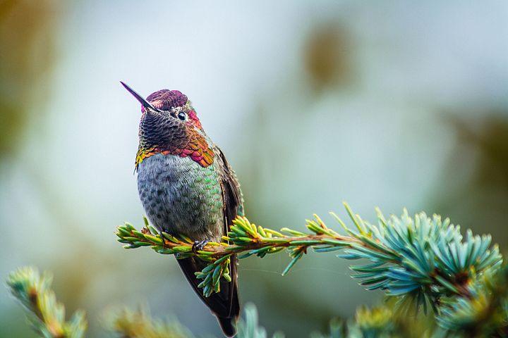 Hummingbird photo 10