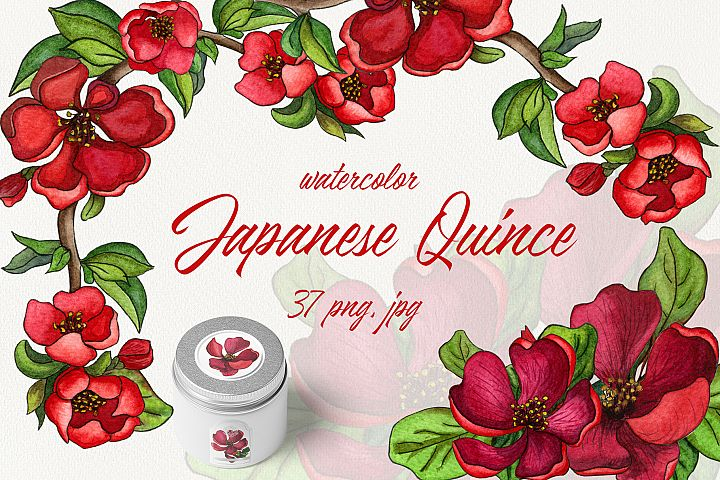 Watercolor Japanese Quince