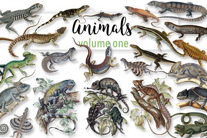 Lizards - Volume One - Animals 20 Count