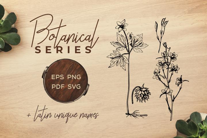 Botanical Vintage Flowers -Illustration anemone & larkspur
