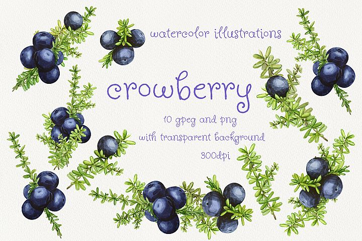 Crowberry. Watercolor illustration set