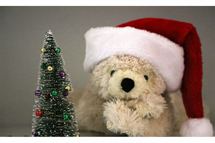 Bear Christmas Photos