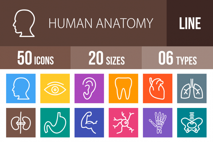 50 Human Anatomy Line Multicolor B/G Icons