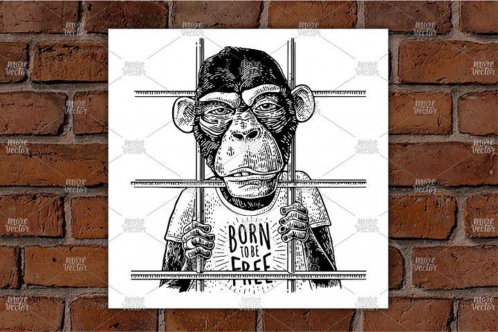 Arrested Monkey dressed in t-shirt Vintage black engraving