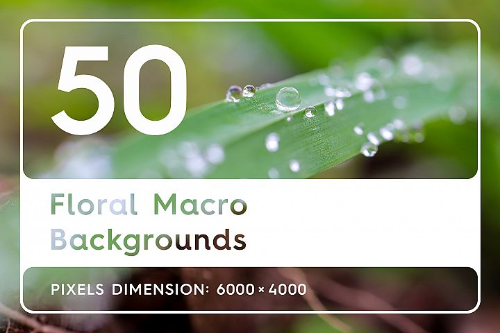 50 Floral Macro Backgrounds