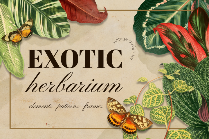 Vintage exotic herbarium design set