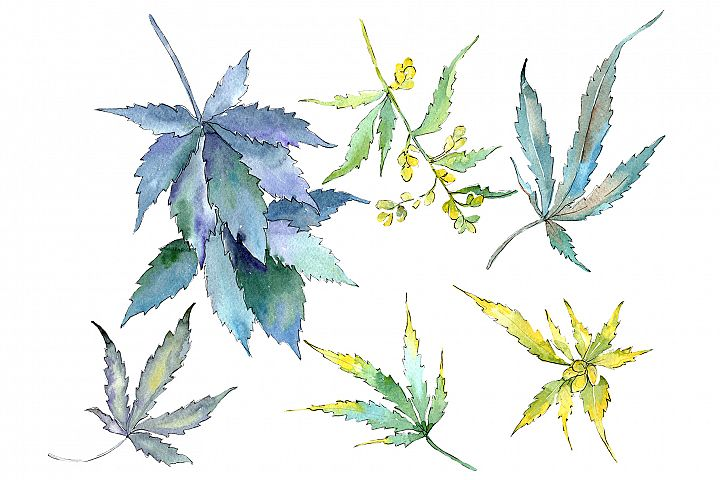 Cannabis Watercolor png