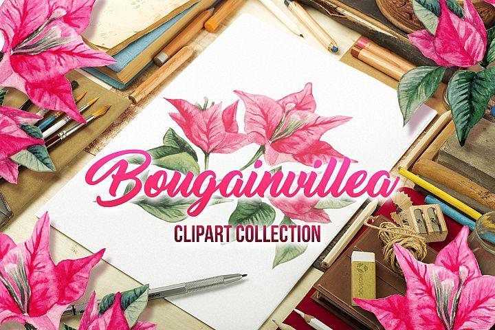 Bougainvillea Floral Clipart