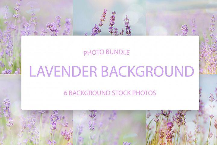 Lavender Photo Background