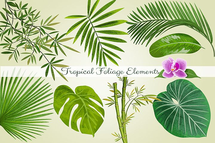Tropical Foliage PNG Graphic Elements and Digital Paper