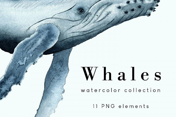 Whales - Watercolor collection