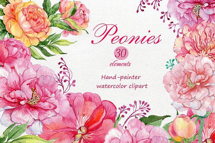watercolor clipart /flowers peonies