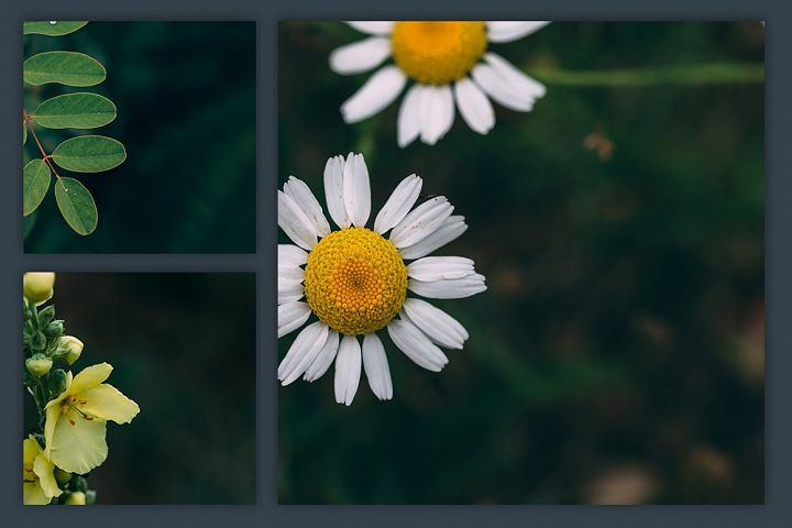 Instagram Photo Pack - Flora Vol. 1 example 5