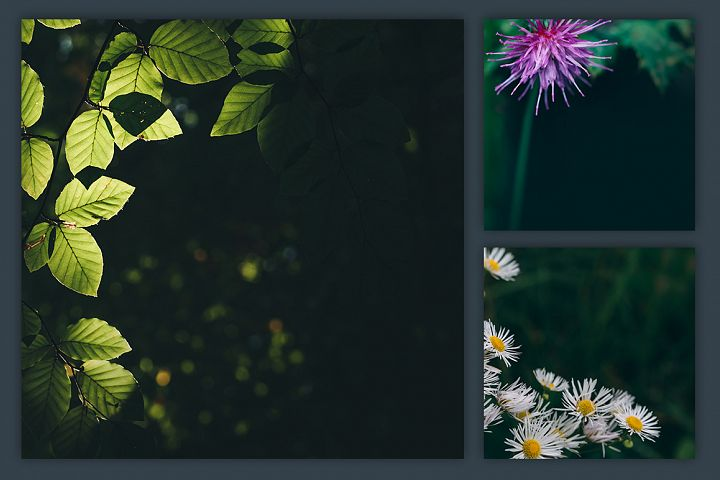 Instagram Photo Pack - Flora Vol. 1 example 4
