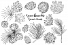 Pine cones and branch example image 6