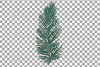 Cotton bolls and fir branch leafy autumn and winter decor example image 20