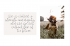 Sunshine - A Handwritten Script Font example image 6